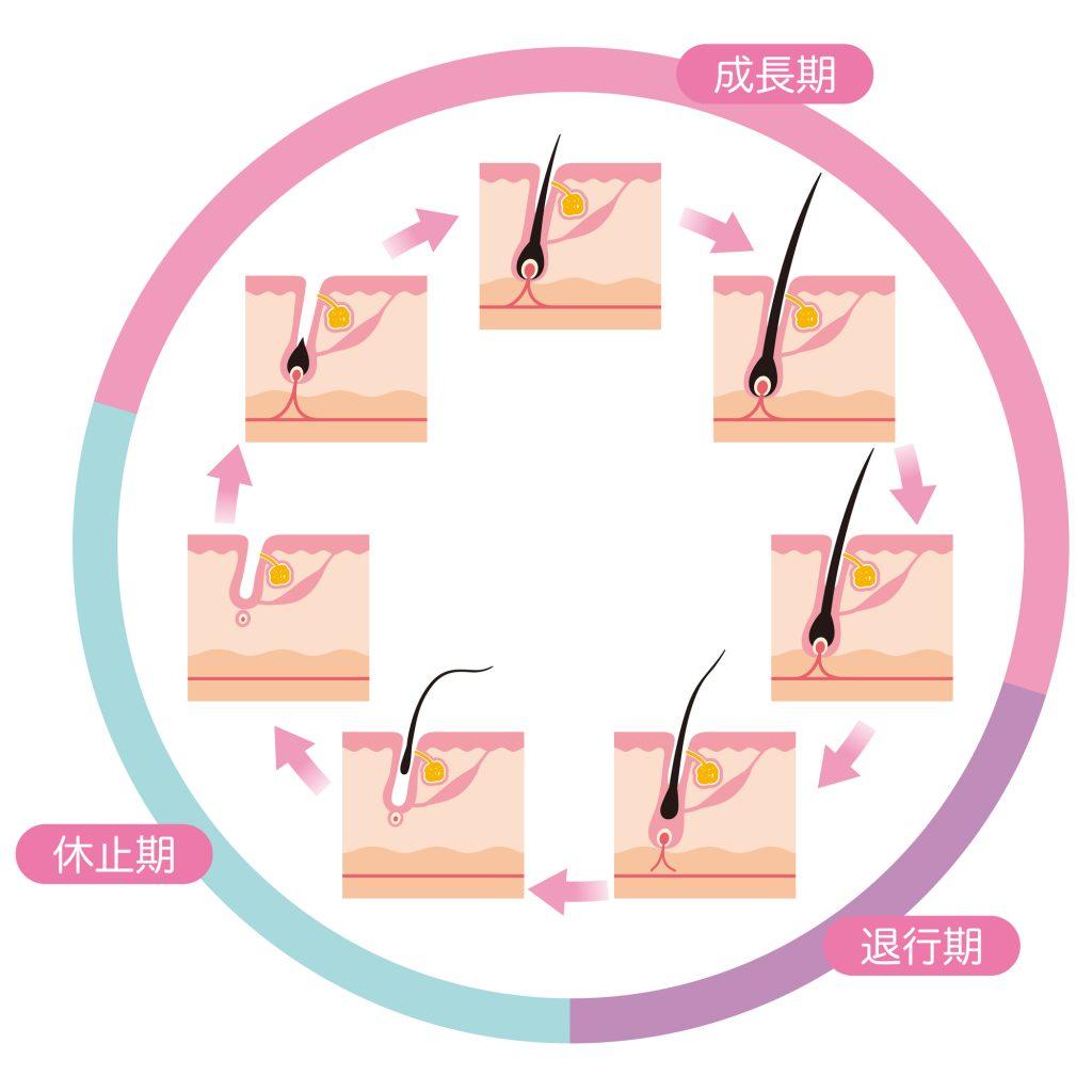 ヘアサイクルの周期