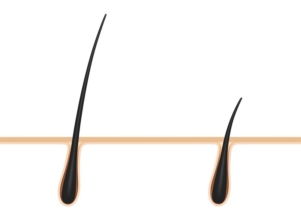 髪の毛の伸び率